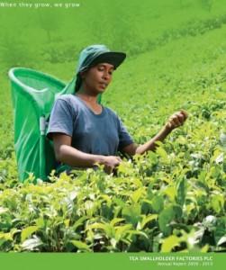 Tea Smallholder Factories PLC