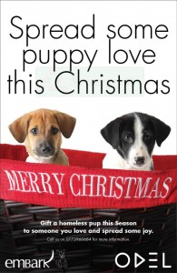 Celebrate your Christmas with Homeless Puppy from ODEL Embark