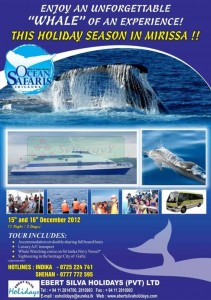 Whale Watching in Srilanka – Mirissa December 2012