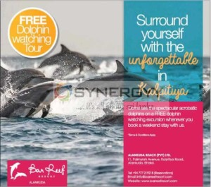 Stay Weekend at Ban Reef and enjoy Free Dolphin Watching at Kalpitiya