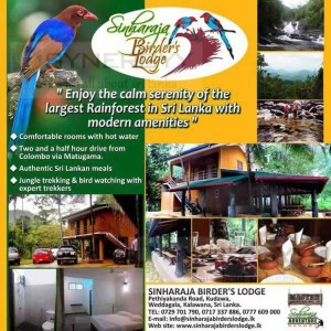 Sinharaja Birder's Lodge –a fine Hotel closest to Sinharaja Rain Forest