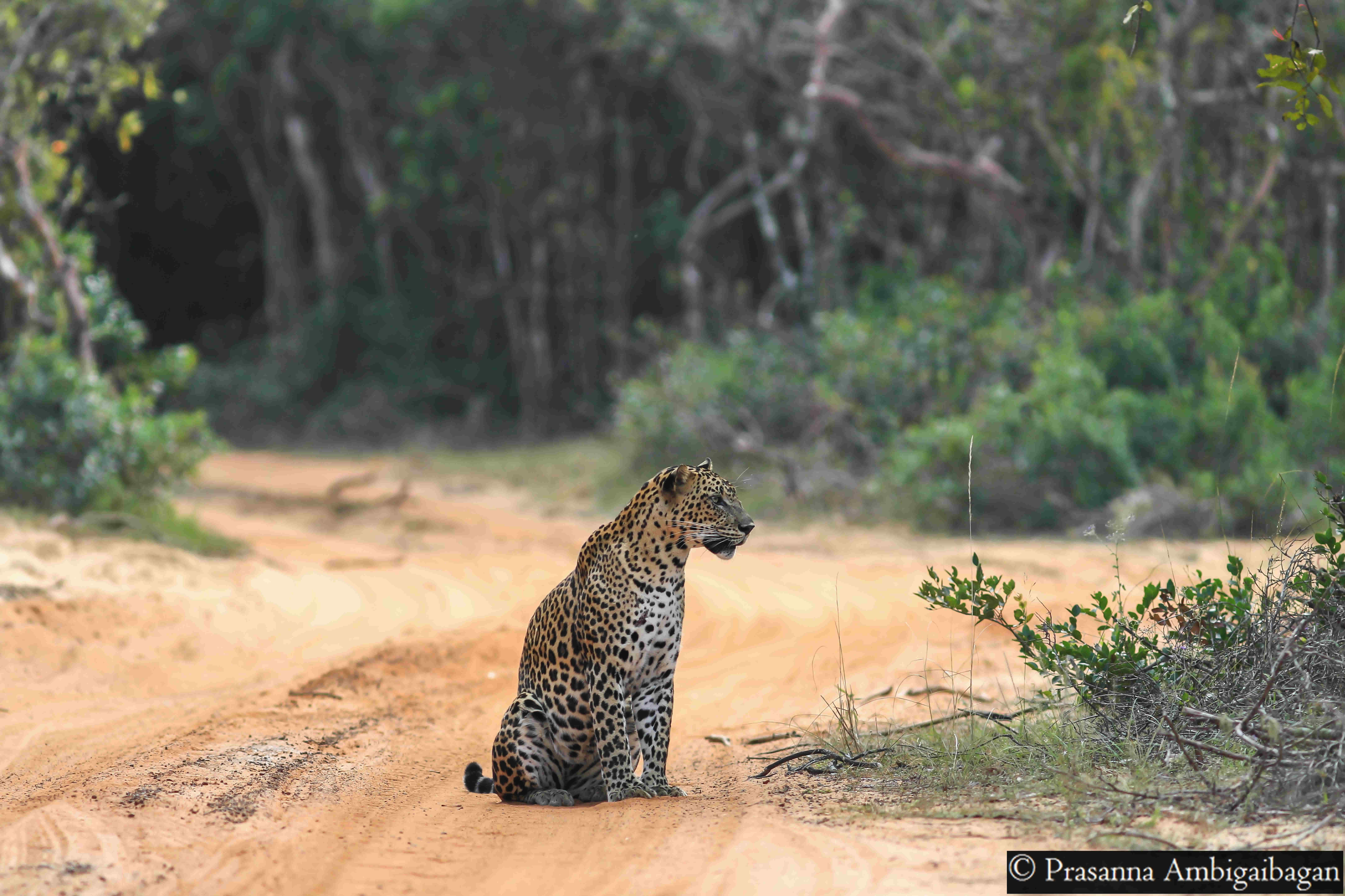 Wildlife Tours and Wildlife Photography Tours to Sri Lanka – FREE KNOWLEDGE SHARING SERVICE