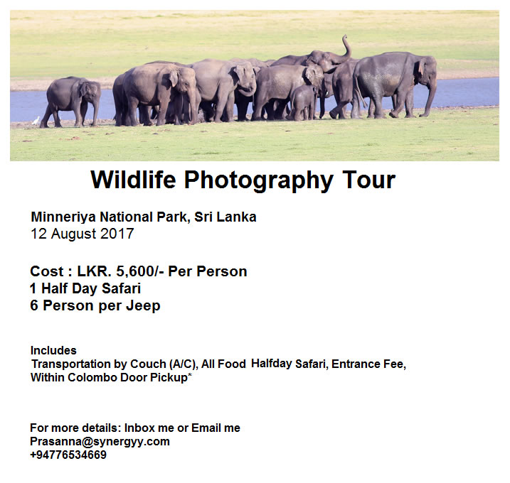 Wildlife Photography Tour To Minneriya NP on 12 August 2017 by Prasanna Ambigaibagan