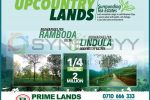 Prime Lands Upcountry Lands – ¼ Acre for 2 Million